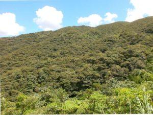 涼風近辺の山と森